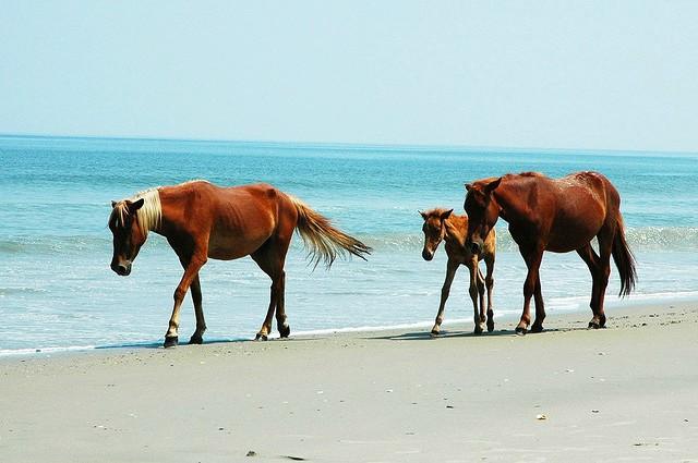 obx beach mustangs